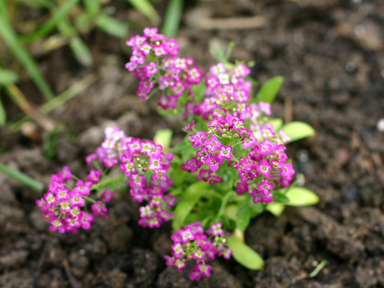 Small pink flowers mightylinksfo