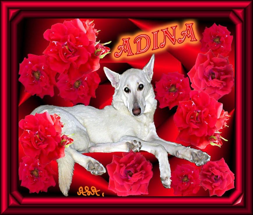 Rosor runt Adina