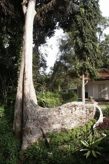 Baum Wurzel